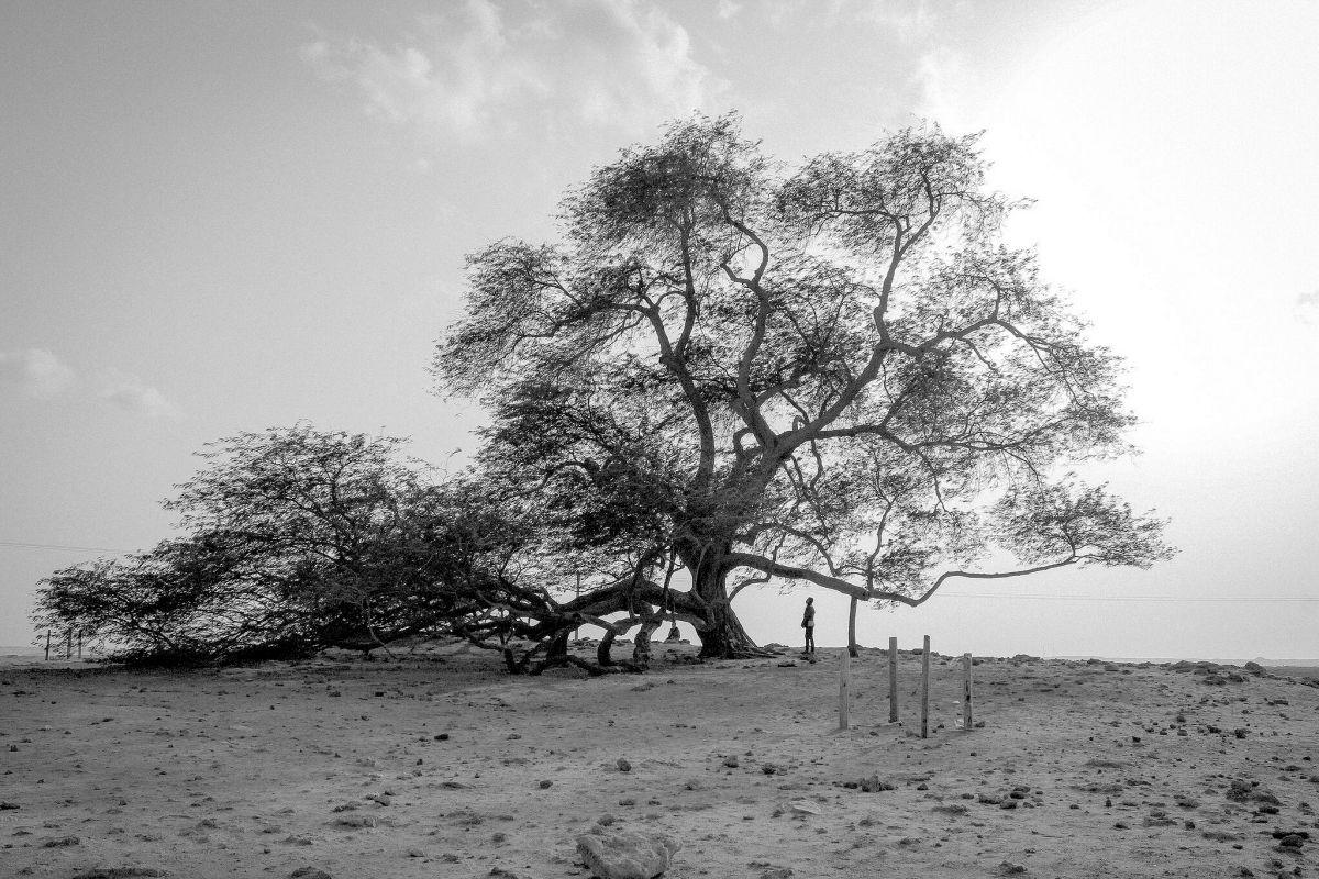 arbol de la vida bahrein